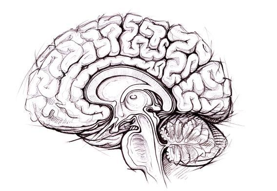 brain_sketch